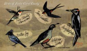 Birds_SantaClara1